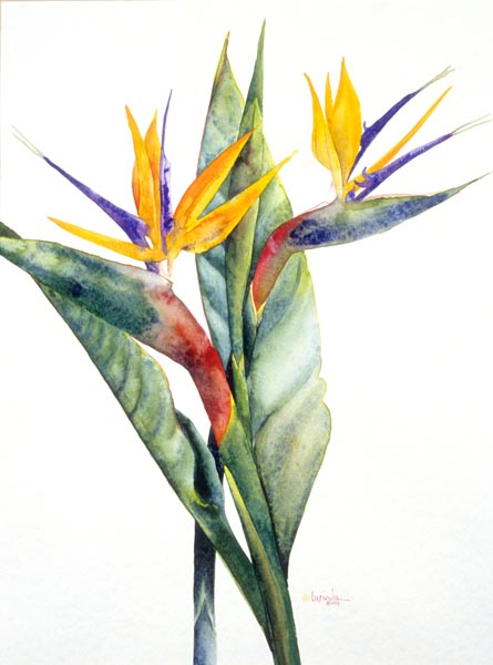 Birds of Paradise by Lucinda Hayes